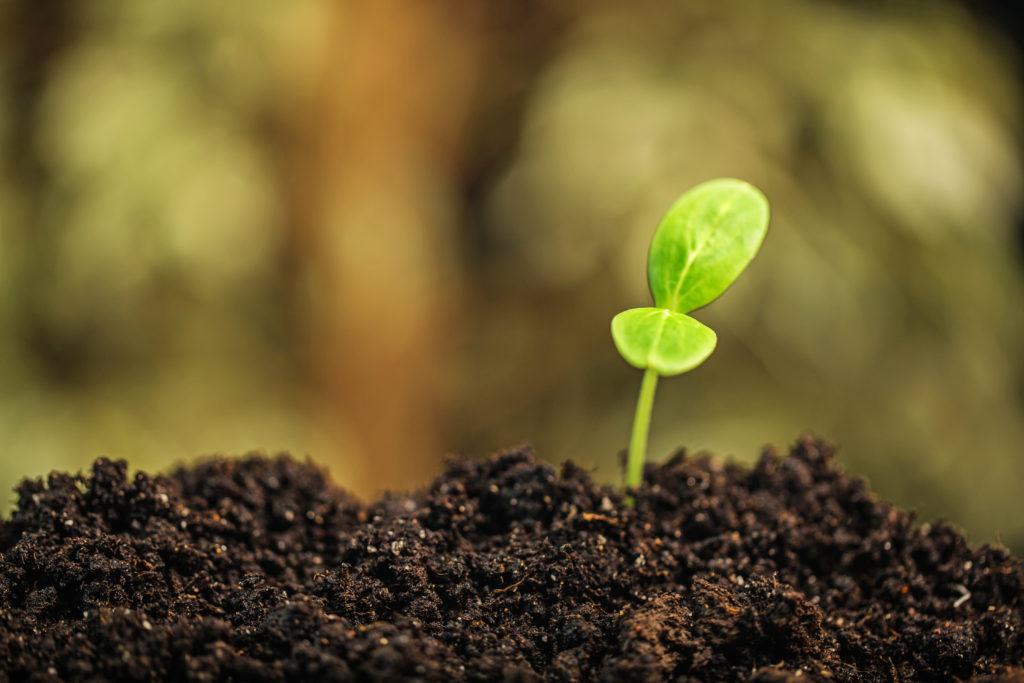 Fertilizzante in simbiosi con la natura
